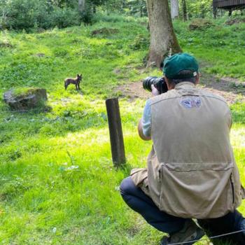Fotos ohne Zaun bei der Wolfsfütterung